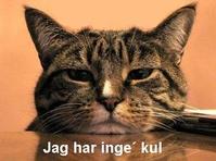 bored_cat_thumb.jpg