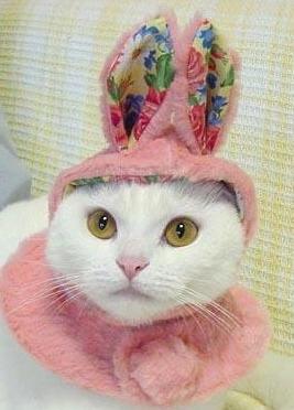 easter_cat_130330.jpg